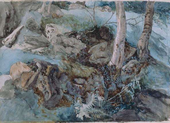 John Ruskin-Roches et fougères dans un bois à Crossmount, Perthshire