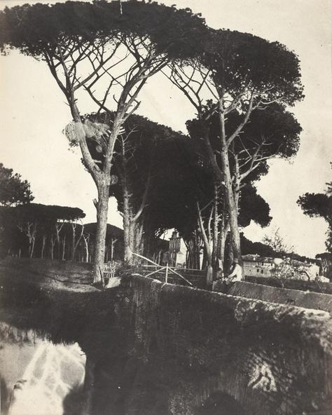 Giacomo Caneva (attribué à)-Pins de Castelfusano dit aussi Jardin de la Villa Doria Pamphili à Rome