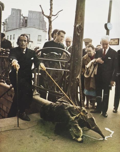 Photographie par Patrice Habans, Paris-Match n°1055, 26 juillet 1969-Salvador Dali sortant du sous-sol du subconscient tenant en laisse un tamanoir romantique, l'animal qu'André Breton avait choisi comme ex-libris