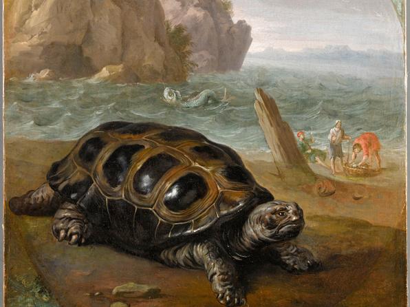 Une tortue de la mer